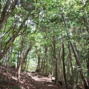 「森の力」についての考察-音環境-
