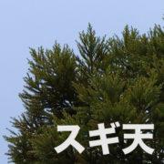 vol.000 新プロジェクト【スギダラ×ツアーグッズ】